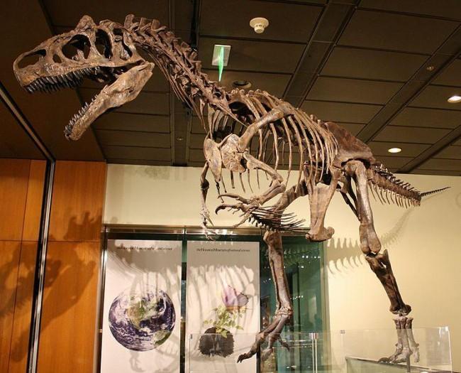 Creation Museum Claims Allosaurus  Skeleton Proves Noah's Flood