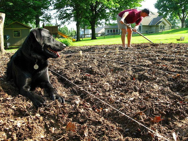 Dogs Flash New Talent Detects Cancer and Food Contaminants