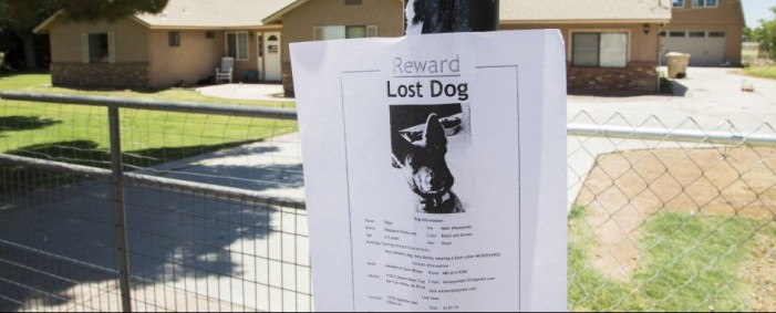 Arizona Senator's Son Austin Flake Linked to Death of 20 Dogs [Video]