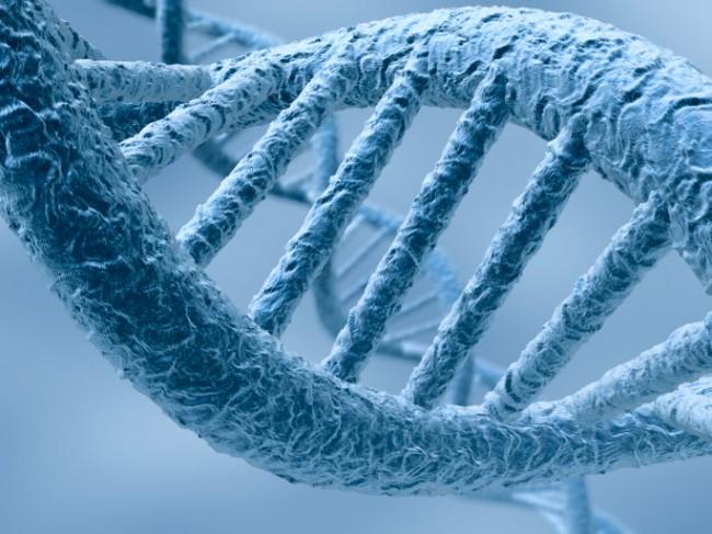 APOC3 gene