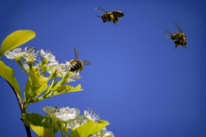 Bees Have GPS