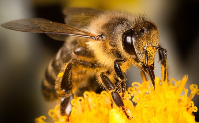 Bees Vital to Survival of Crops and Economy