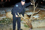 Boulder Officer Texted That Elk Was 'Gonna Die'