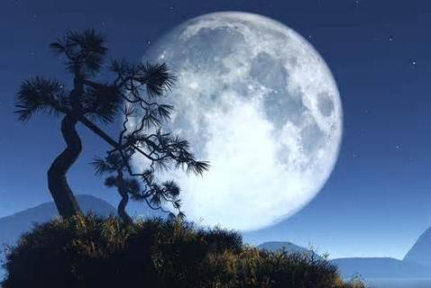 Moon Insomnia