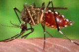 Chikungunya Fever Spreading in Tennessee