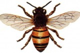 Bee Byproducts Good for Health