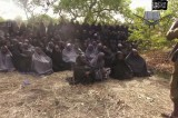 Boko Haram Defeated by Animals