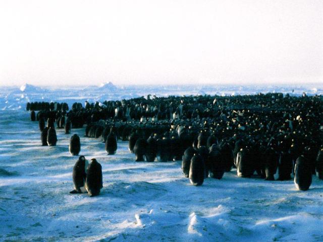 Antarctica Faces Drastic Changes