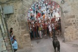 Pamplona Police Looking for Man Who Took Running of the Bulls Selfie