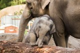 Elephant Exhibit at Oregon Zoo to Set New Standards for Pachyderm Care