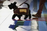 2014 Commonwealth Games 'Disrespectful' for Using Scottie Dogs