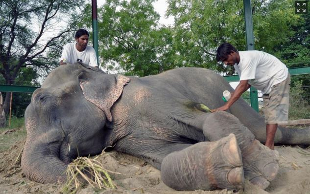 Elephant Weeps When Freed From Captivity