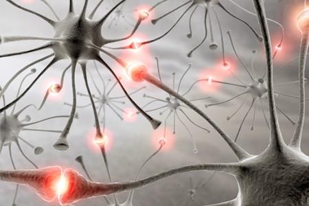 sleep neuron research SHY hypothesis