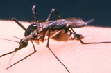 West Nile Virus Confirmed in Travis County Texas