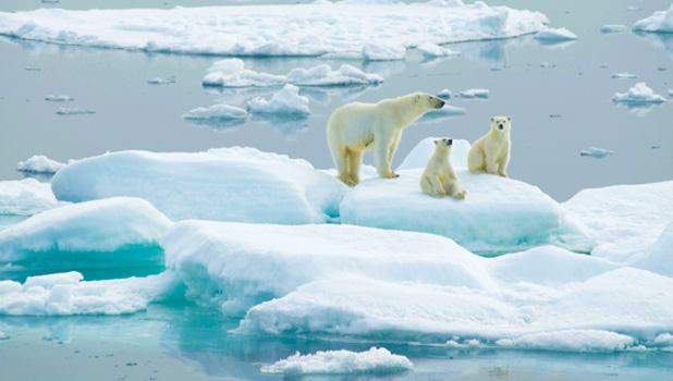 arctic ocean mammals are safe for now guardian liberty voice. Black Bedroom Furniture Sets. Home Design Ideas