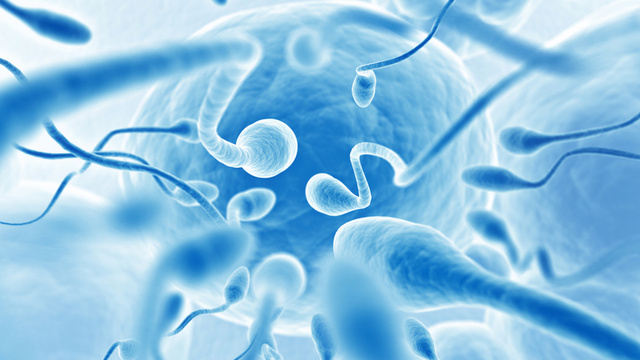 Sperm That Cooperate and Form Groups in Their Drive to the Egg Win