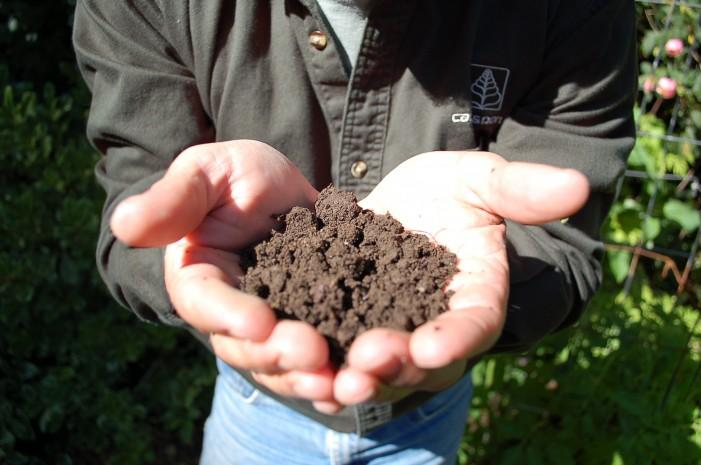 Antidepressant Dirt: Friendly Bacteria May Boost Serotonin Levels