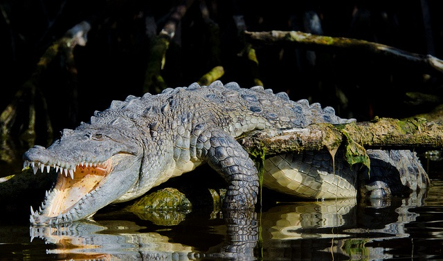Two People Attacked by Crocodile in Florida Canal