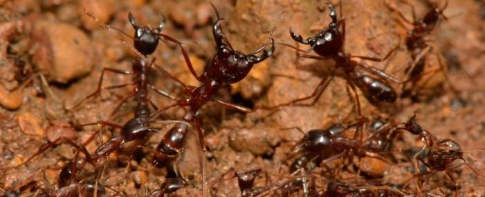 Ants as Natural Enemies Keep Homes Termite Free in Cameroon [Video]