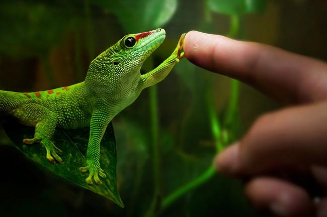 gecko toe hair
