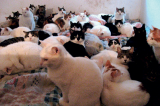 Cat Hoarding Woman Evicted as Felines Are Killed