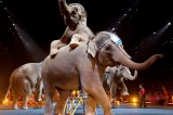 California Protests Heat Up as Ringling Brothers Tours [Graphic Video]