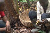 Watch Cocoa Farmers Taste Chocolate for the First Time (Viral Video)