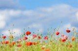 World War I Centenary Commemoration