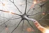 Multiple Sclerosis: Common Signs and Symptoms