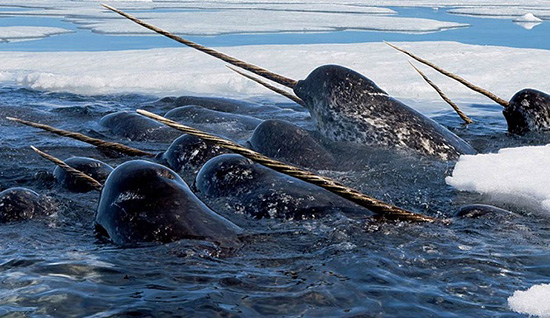 Arctic Ocean Creatures Could Hold the Key to Climate Change [Video]