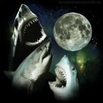 Supermoon, Sharks and Soup