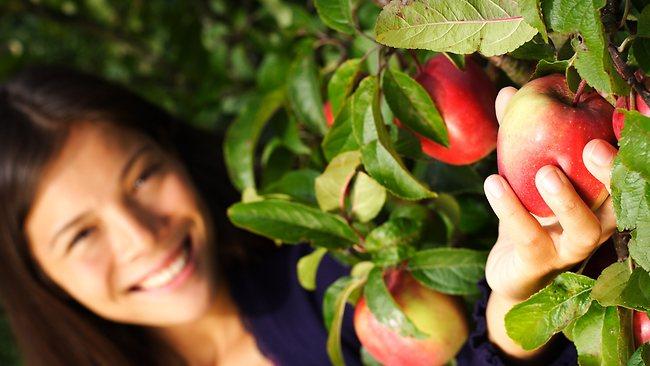 An Apple a Day Keeps CVD Away