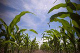 Why GMO Labeling Is Completely Ridiculous