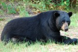 Black Bear Kills Rutgers Student in New Jersey Nature Preserve