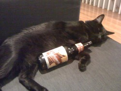 Cats are Drinking Their Fair Share