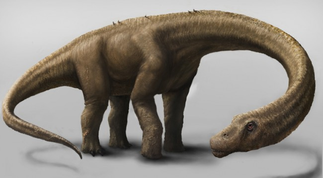 Dinosaur Believed to Be Largest Ever Lived Found in Argentina