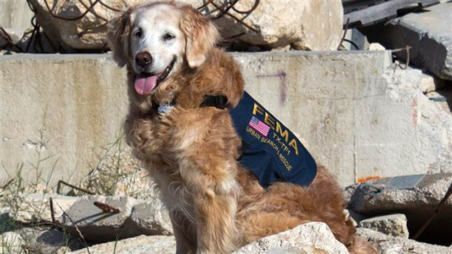 Heroic 9/11 Rescue Dog Returns to Ground Zero for First Time Since Attacks