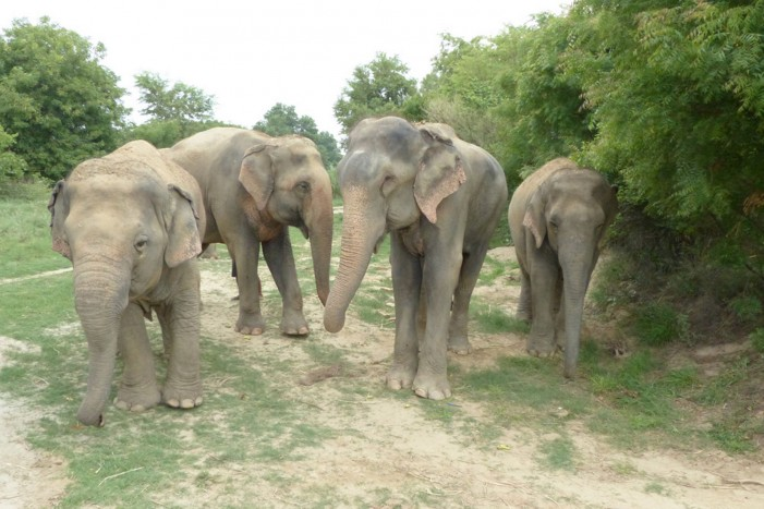 Elephant Must Not Return to Abuser