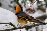 Climate Change a Threat to Birds