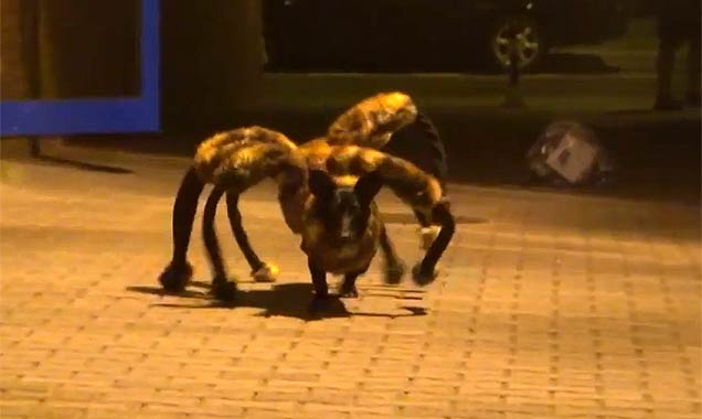 Beware of the Spider Dog [Video]