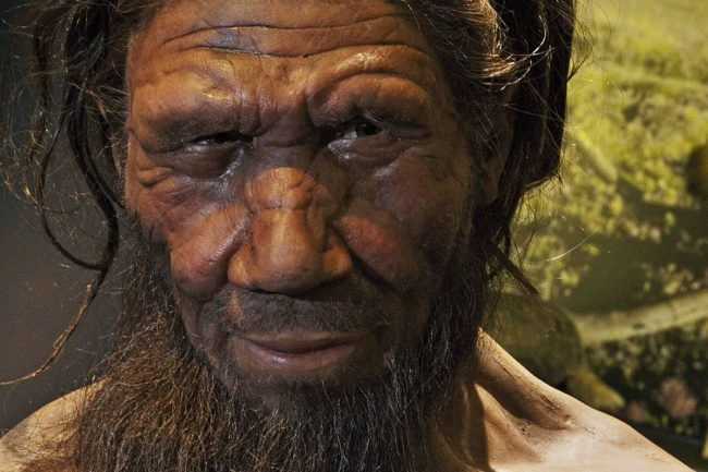 cave art reveals the neanderthal more intelligent than
