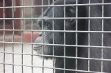Chimpanzees Human-Like and Personable