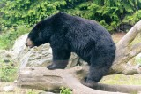 Bear in China Zoo Bites off 9 Year Old Boy's Arm