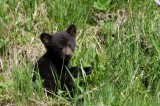 Black Bear Cub Found Dead in Central Park Likely Hit by Car