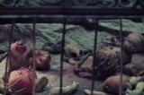 American Horror Story Opening Credits:  Can They Show That On TV? (Video)