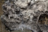 Mammoth Skull Discovered in Southeastern Idaho