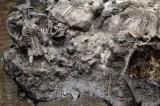 Mammoth Skull Discovered in Southeastern Idaho