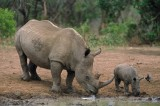 Safari Company Charged With Selling Illegal Rhino Hunts to U.S. Hunters