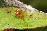 Group Selection in Social Spiders?