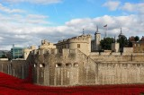 Tower of London Poppies Will Be Removed Tomorrow